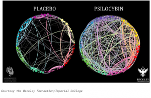 Psilocybin Research and Whole-brain Coherence